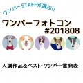 ワンパーフォトコン(#ワンパー201808)入選&ベスト・ワンパー賞発表!