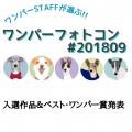ワンパーフォトコン(#ワンパー201809)入選&ベスト・ワンパー賞発表!