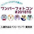 ワンパーフォトコン(#ワンパー201810)入選&ベスト・ワンパー賞発表!