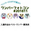 ワンパーフォトコン(#ワンパー201811)入選&ベスト・ワンパー賞発表!